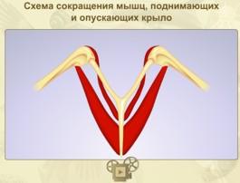 myshci_ptitsi.jpg